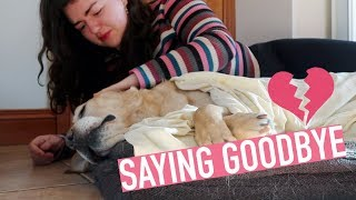 Saying Goodbye 😭 Our Dog Died 💔