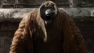 The Jungle Book | The Animals