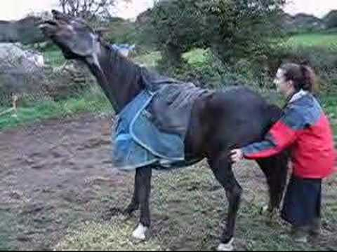 Gay, A Very Itchy Horse