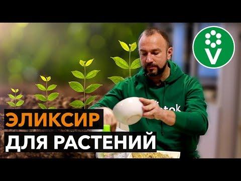Стимулятор роста растений своими руками. Быстрый рост гарантирован!
