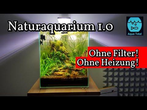 Aufbau und Einrichtung des Naturaquarium 1.0 ohne Filter ohne Heizung - Aquascape Pflanzenaquarium