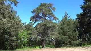 Дикая природа. Лес