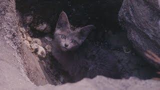流浪猫不忍心看救命恩人一直单身,于是化身为人报恩,令人感动
