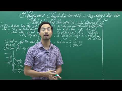 Môn Sinh lớp 11 - Thầy Nguyễn Thành Công