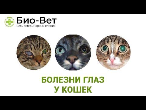 Болезни Глаз у Кошек - Причины и Лечение // Сеть Ветклиник БИО-ВЕТ