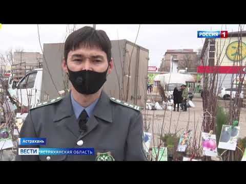 В Астраханской области Управлением Россельхознадзора проведен карантинный фитосанитарный контроль в местах реализации посадочного материала