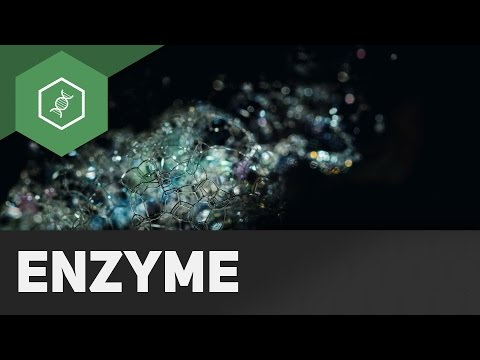 Enzyme im Alltag