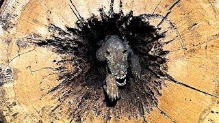 Лесорубы Не Поверили в То, Нашли Внутри Дерева