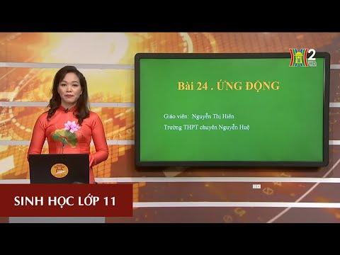 Môn Sinh học - Lớp 11|Bài 24| 16H30 NGÀY 21.03.2020 | HANOITV