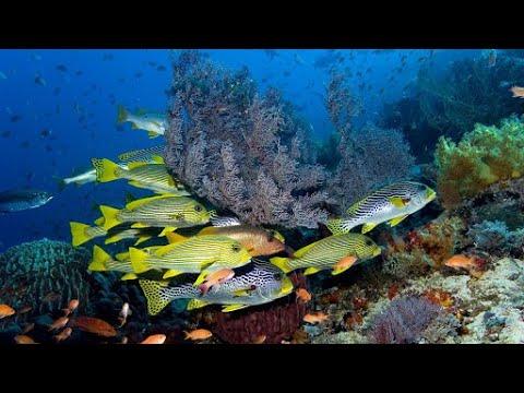 Как появились моря и океаны?