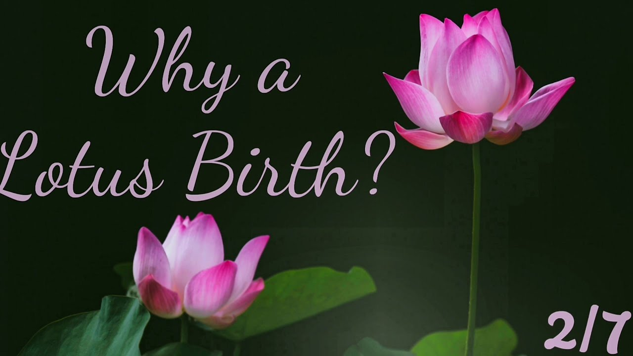 Lotus birth: details, possible risks and benefits