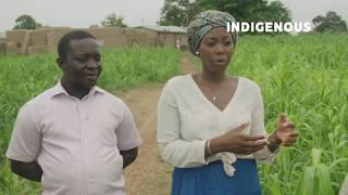 Why is the use of millet declining in Ghana?