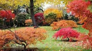 Excellent Japanese Maple Varieties