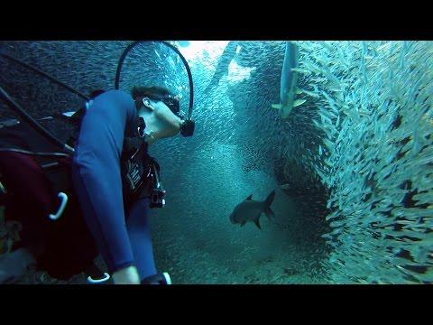 hqdefault - Buceando entre un millon de peces