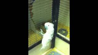 Pet shop kittens climbing the cage
