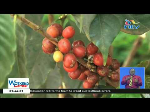 Kiambu County partners with Sasini to help coffee farmers get more value
