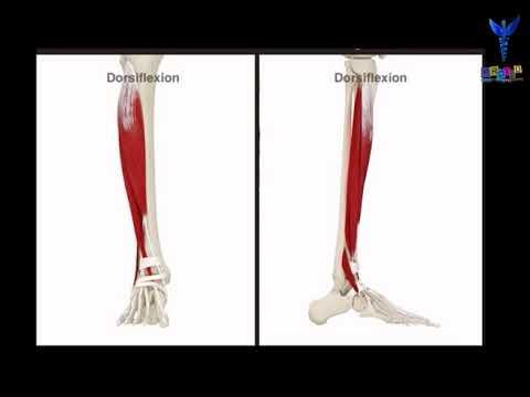 Boursit les tendons de la tête moyenne du muscle jumeau