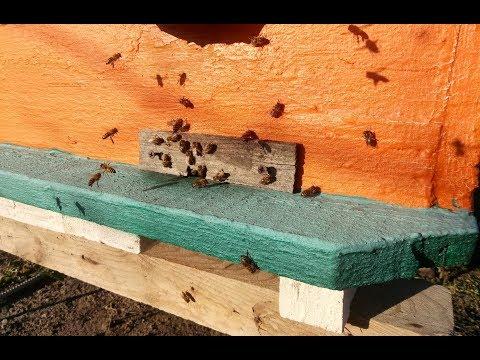 Облёты пчелы на пасике в декабре