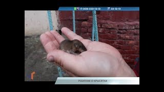09.08.19. Новости Северного города. Ребятам о крысятах. Закатали в асфальт. Как строить на Севере?