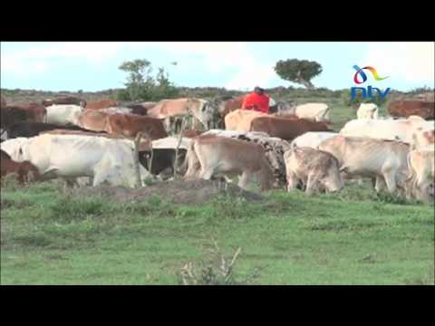 Herders allowed to graze in conservancy to save livestock