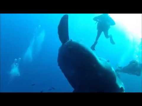 Mola Mola bei Gozo, Gozo allgemein,Malta