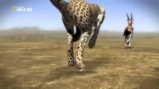 Yo Depredador - El Guepardo - HD