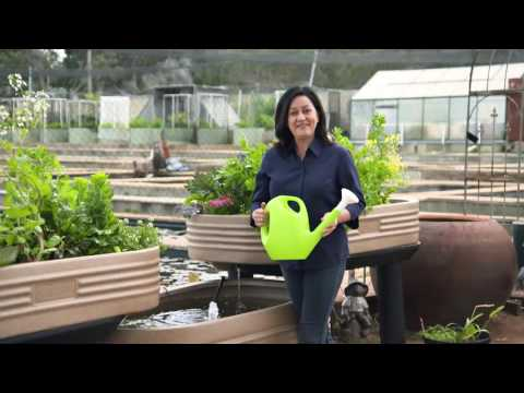 Waterwise Ponds and Aquaponics