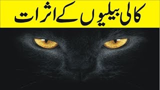 Is black Cat Sign of Bad Luck ? - Black Cat Superstition -Why are Black Cats Considered Bad Luck
