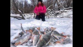 Ловля окуня на алтае зимой