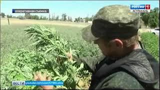 Житель Астраханской области осуждён за плантации конопли