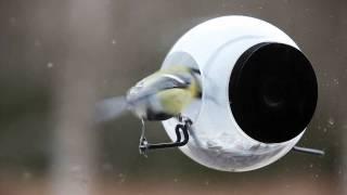 Born in Sweden Birdfeeder vogelhuisje