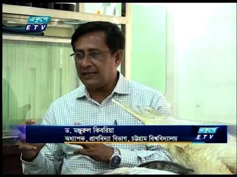 হালদার বিলুপ্ত প্রজাতীর ডলফিনের জীবন রহস্য উন্মোচন করেছে চট্টগ্রামের একদল গবেষক