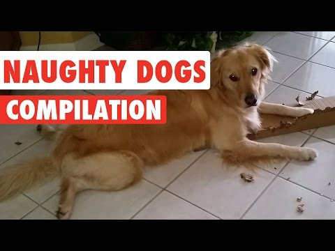 Naughty Dogs Video Compilation 2016