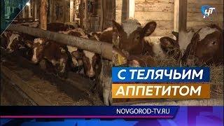Записи в социальных сетях о гибели поголовья телят в Успенском оказались фейком