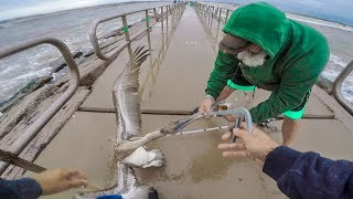 saving pelican stealing illegal trout - catch and cook