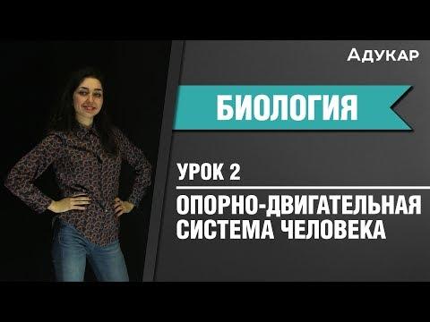 Опорно-двигательная система человека   Биология ЕГЭ, ЦТ