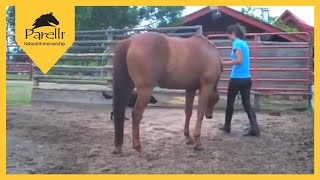 Parelli Horse Doesn't Want Its Owner to Leave! Horse Bonding with Human