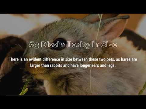 Differences Between A Rabbit And A Hare