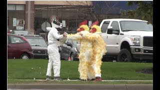 Costumed Chickens Beat up Costumed Cow
