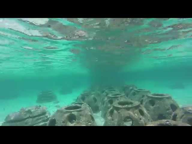 Grand Bahama Snorkeling at Dead Man's reef