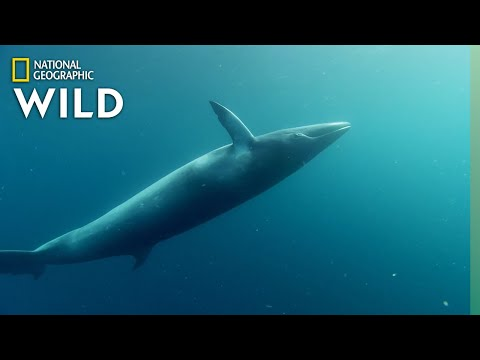 The Whales of the Great Barrier Reef | Great Barrier Reef