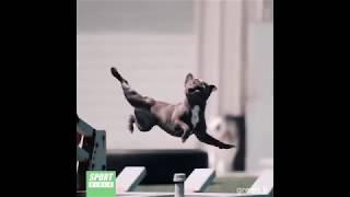 Приколы 2019 Самые смешные Приколы с Животными Коты Собаки