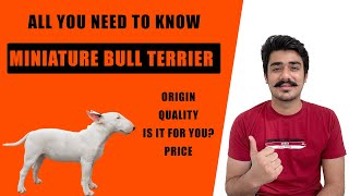 MINIATURE BULL TERRIER DOG INDIA   BULL TERRIER PUPPIES PRICE IN INDIA   DOG BREED IN HINDI