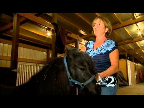 Owner says man sexually abused her miniature horses