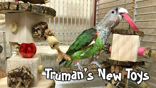 Truman Cape Parrot - New Toys & Temporary Cage Setup