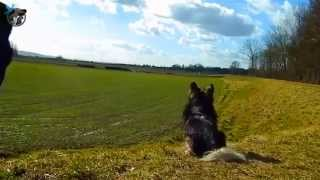 preview picture of video 'Hunde Ausflug ins Grüne - Promo Video | Leihfrauchen - Julia Weber, Tierbetreuung mit Herz'