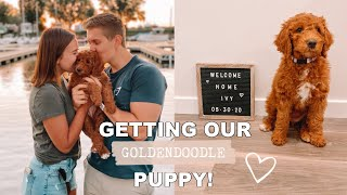 WE GOT A PUPPY! | Picking Up Our Goldendoodle Puppy!
