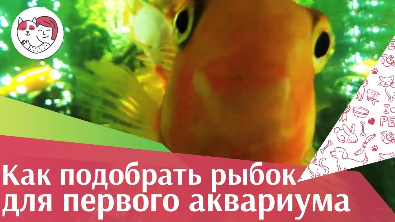 5 правил выбора аквариумных рыбок для новичка на ilikepet