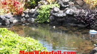 preview picture of video 'Soaking pond in Wailuku, Maui, Hawaii'