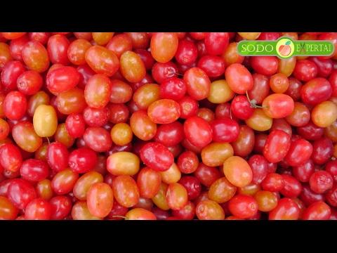 Stevia nuo hipertenzijos kaip vartoti
